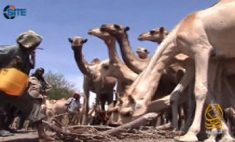 Shabaab Video Shows Distribution of Camels, Livestock for Charity