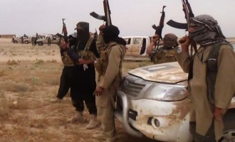 Jihadists Reject Calls for Unity with IS
